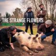 The Strange Flowers - Pearls at Swine